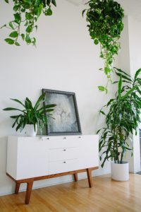 how-to-decorate-a-living-room-with-indoor-plants